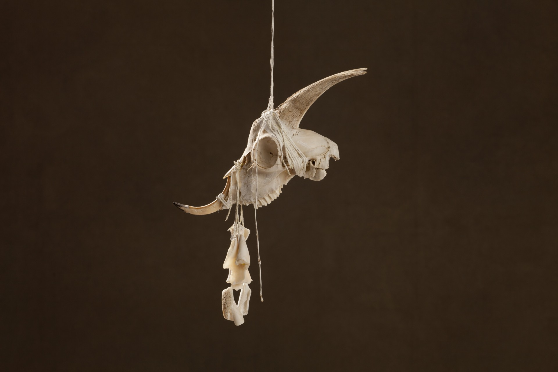 Dragon Arawak, 2010 29 x 11 x 29 cm / 11.4 x 4.3 x 11.4 inches Mixed Media / goat Skull