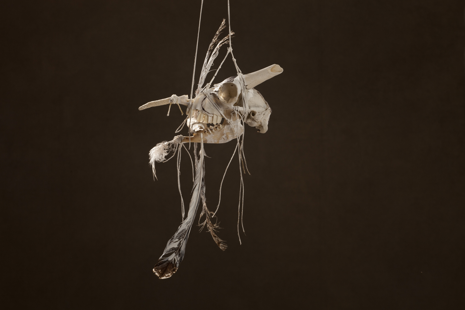 N49, 2011 44 x 30 x 85 cm / 13.3 x 11.8 x 33.5 inches Mixed Media / goat Skull