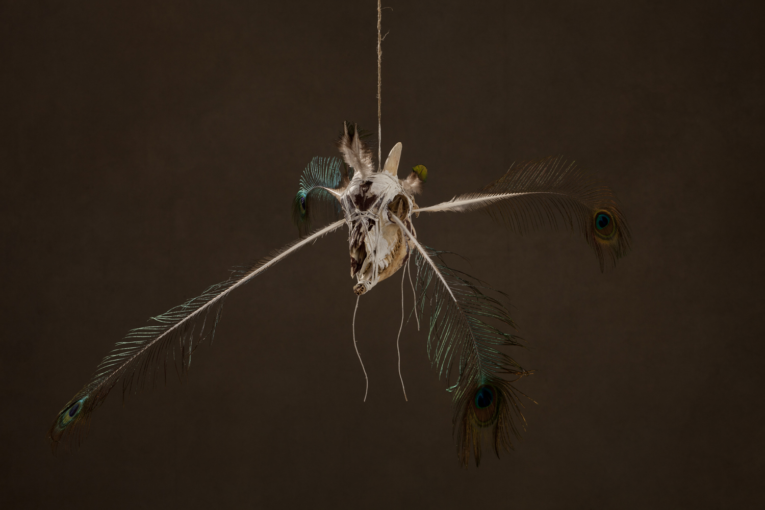 N47 SPIRIT CATCHER, 2011 60 x 80 x 20 cm / 23.6 x 31.5 x 7.9 inches Mixed Media / goat Skull