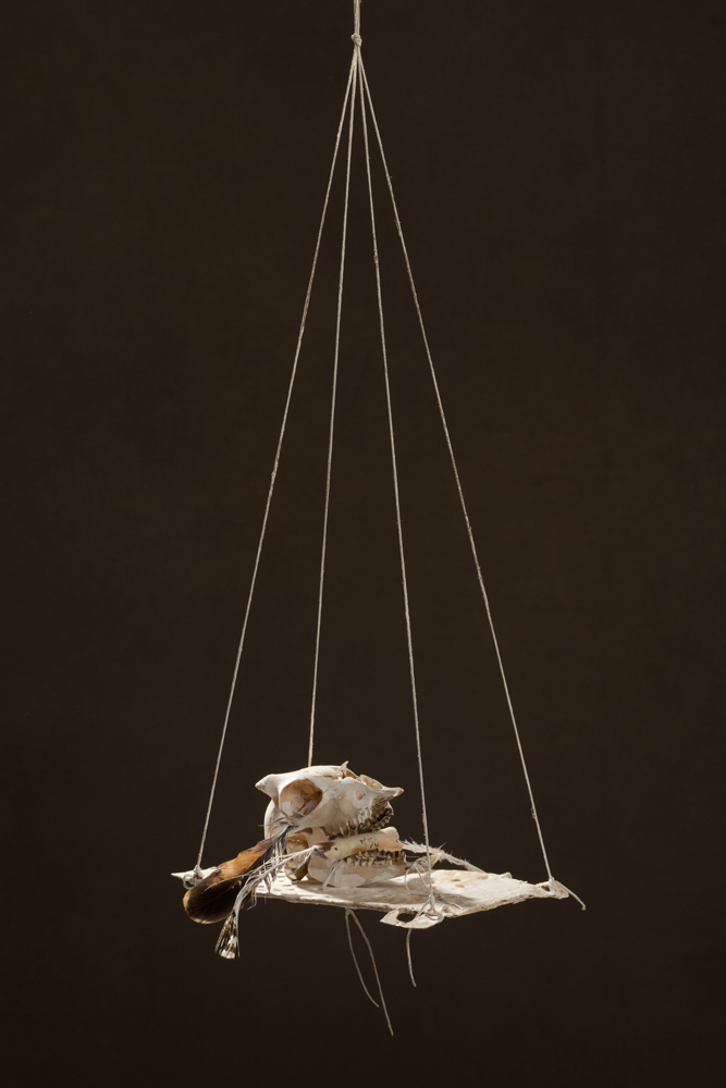 N50, 2011 25 x 35 x 11 cm / 9.8 x 13.8 x 4.3 inches Mixed Media / goat Skull