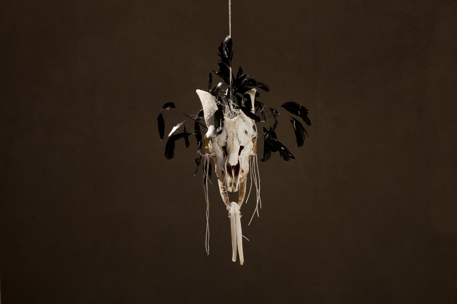 N52, 2011 43 x 33 x 27 cm / 17 x 13 x 10.6 inches Mixed Media / goat Skull